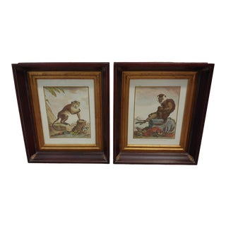 1950s Vintage Framed Monkey Prints - A Pair For Sale