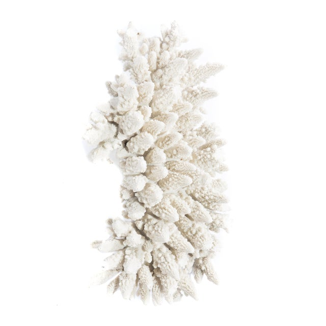 LARGE WHITE CORAL SPECIMEN - Image 8 of 10