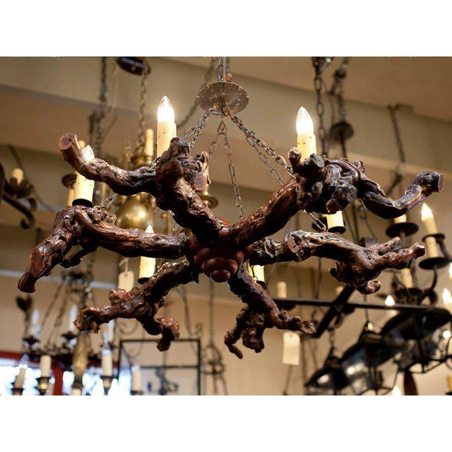 Rustic Gnarled Reclaimed Wood Chandelier with Six Lights from Belgium, circa 1950 For Sale In Houston - Image 6 of 10