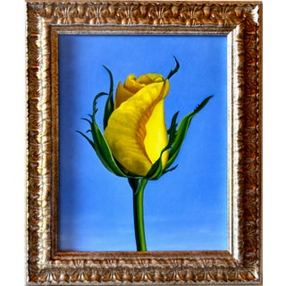 Original Oil Painting of Yellow Rose on Board Framed For Sale