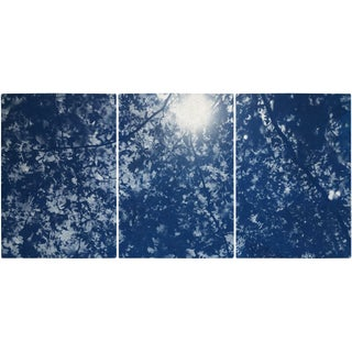 """""""Sunlight Through Forest Branches"""" Contemporary Handmade Cyanotype Print by Kind of Cyan - Set of 3 For Sale"""