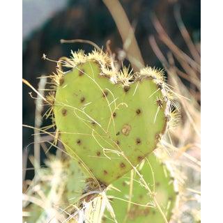 """""""Desert Hearts"""" Original Photograph"""