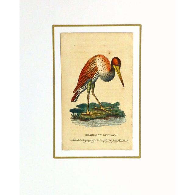 Antique Bird Print Engraving, Bittern, 1798 - Image 4 of 4
