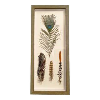 Four Feathers Framed Under Glass by Kalalou For Sale