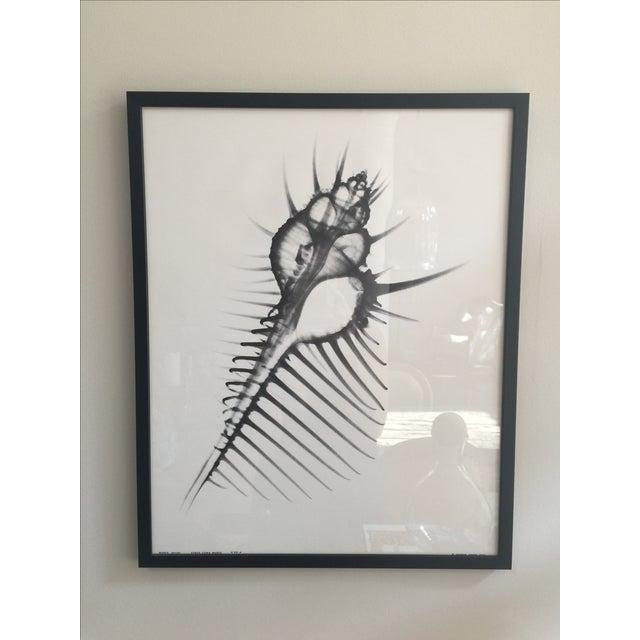 George Green X Ray Print - Image 2 of 5