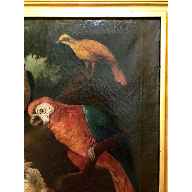 Baroque Jacob Bogdani Follower, Still Life With Parrots Oil on Canvas For Sale - Image 3 of 13