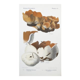 1910 French Vintage Botanical Mushroom Print For Sale