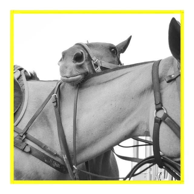 Friendship by Holly Roesch Contemporary Photograph in Yellow Acrylic Frame, Medium For Sale
