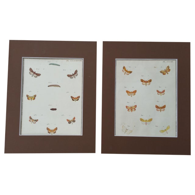 19th-Century French Butterfly Prints - A Pair - Image 1 of 4
