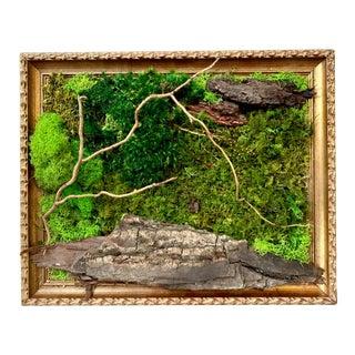 Moss Art in Vintage Frame For Sale
