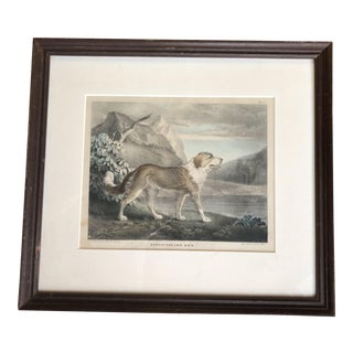 1830s Antique T. Doughty Newfoundland Dog Framed Drawing For Sale