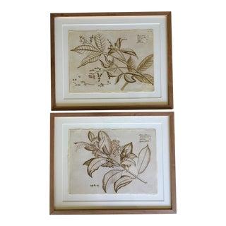 Natural Curiosities Malabracus Botanical Prints - A Pair For Sale