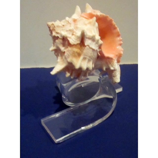 Lucite Napkin Rings Sea Shells Dorothy Thorpe - Image 3 of 6