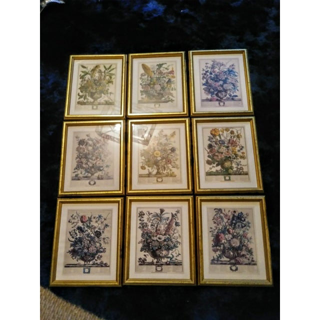 White Set of 9 Vintage Botanical Prints in Gold Antique Frames For Sale - Image 8 of 8
