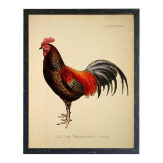 Country Print of Gallus Temminckii Gray Rooster - 14x18 For Sale