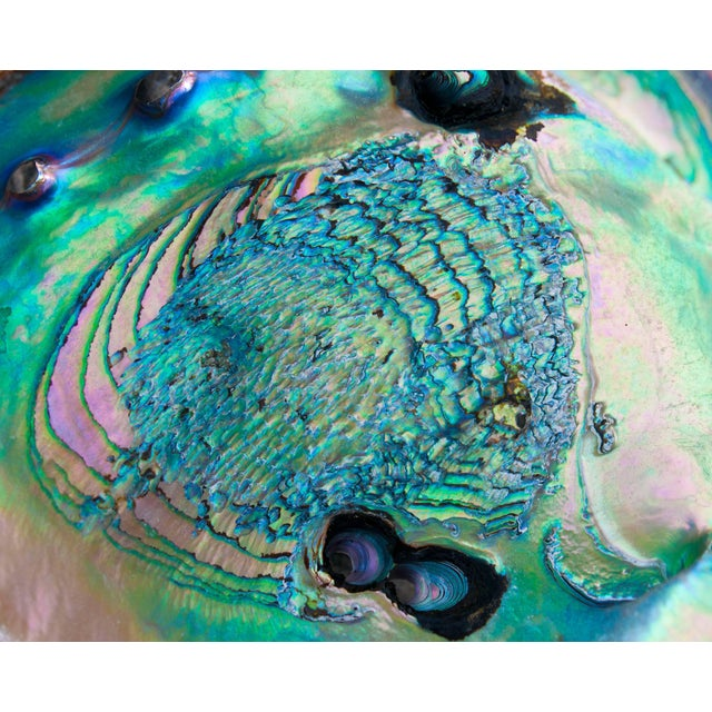 """Gaétan Caron """"Poseidon"""" (Framed) Micro Photograph, Abalone Shell, Mendocino Beach, California 2016 For Sale"""
