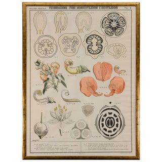 Early 20th Century, Italian Botantical Prints For Sale