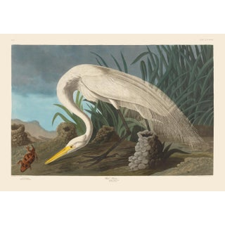 John James Audubon Print, White Heron For Sale