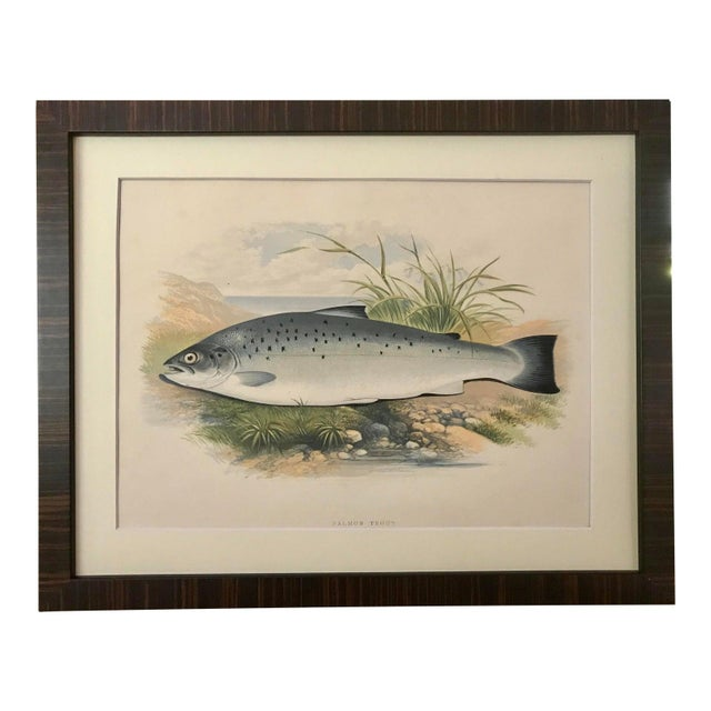 Antique Color Woodblock Print Salmon Trout Fish William Houghton C.1879 For Sale In New York - Image 6 of 6