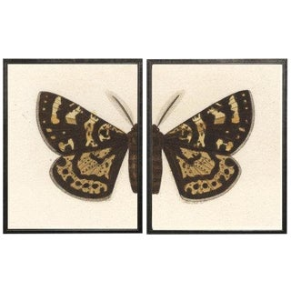 "Split Black and Brown Butterfly - 38"" X 25"" For Sale"