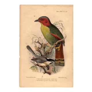 1901 Bird Lithograph After Henrik Gronvold For Sale