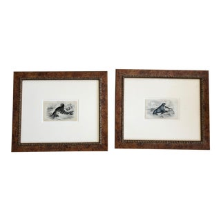 Framed Antique Seal Prints - A Pair For Sale