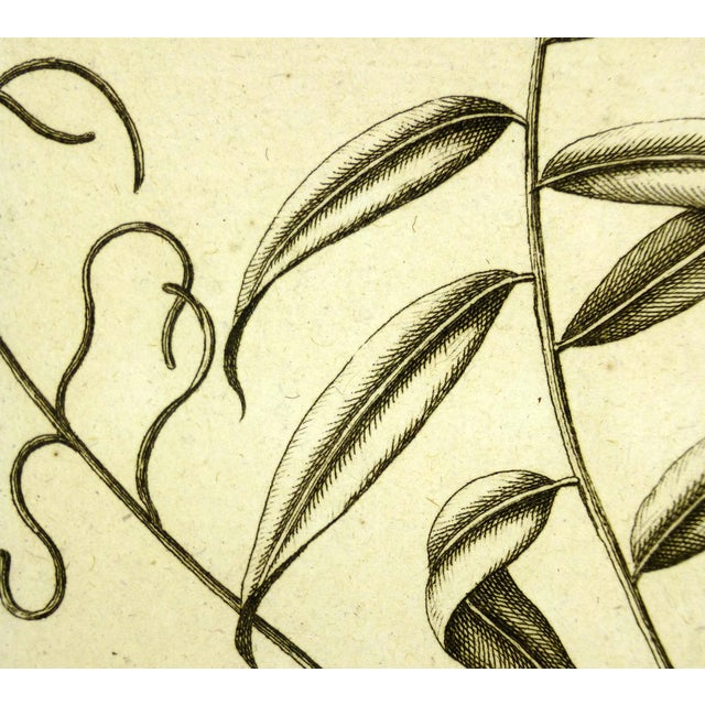"""Over 200 year old copperplate engraving from """"Histoire du Règne Végétal"""" by P.J. Buchoz of delicate, intricate botanicals,..."""