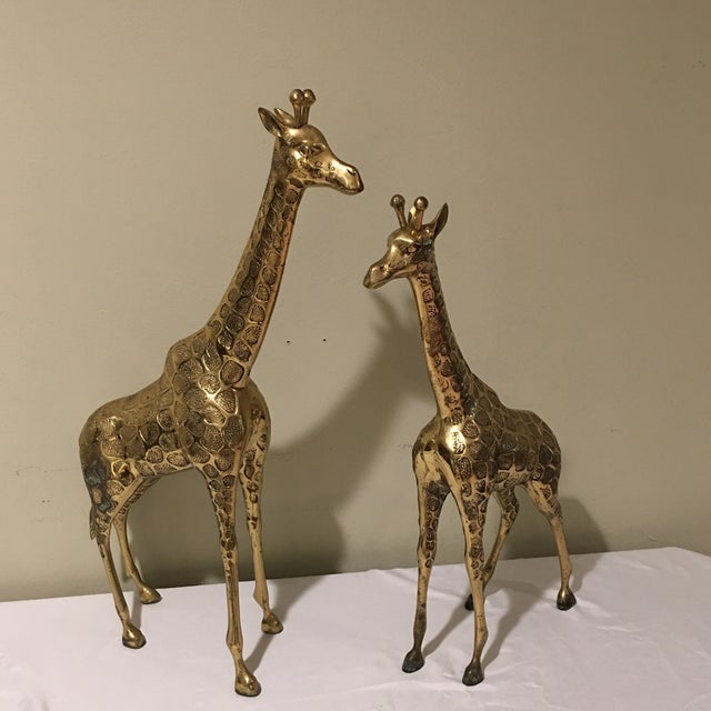 A beautiful rare oversized pair of brass giraffes. These heavily weighted giraffes have excellent detail and are a...