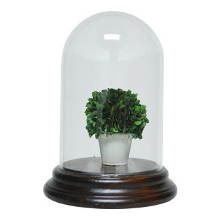 Large Glass Cloche Dome Bell Jar with Mahogany Base For Sale