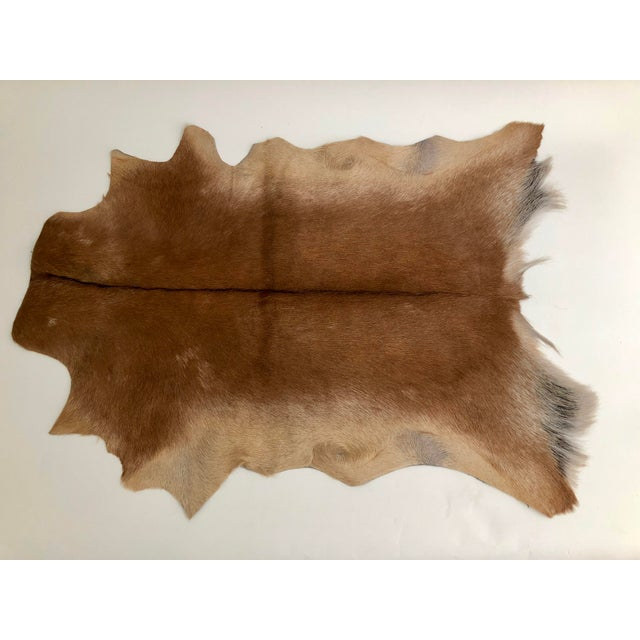 Americana Contemporary Hair on Goat Hide Rug For Sale - Image 3 of 3