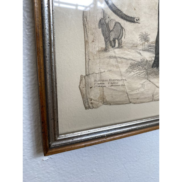 1890s Scientific Study of Elephants Print, Framed For Sale In San Francisco - Image 6 of 7