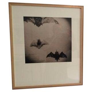 """""""Holga Bats,"""" Jason Thrasher For Sale"""