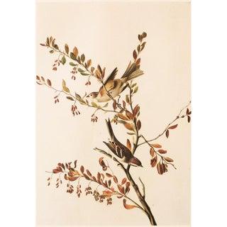Tree Sparrow by John James Audubon, 1966 Vintage Print For Sale