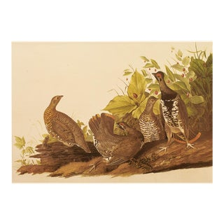 Spruce Grouse by John J. Audubon, XL Vintage Cottage Print For Sale