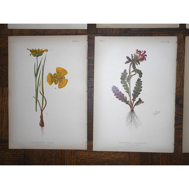 Realism Antique 19th Century Botanical Lithographs - Set of 8 For Sale - Image 3 of 7