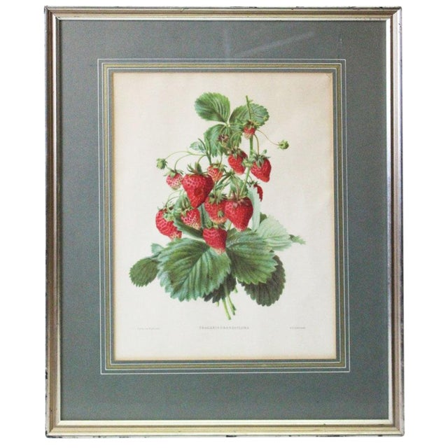 Silver Framed Strawberry Print For Sale