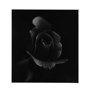 Rose Still Life Black and White Photo by Garo For Sale
