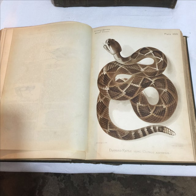 Large Antique Medical Books - Set of 5 - Image 8 of 9