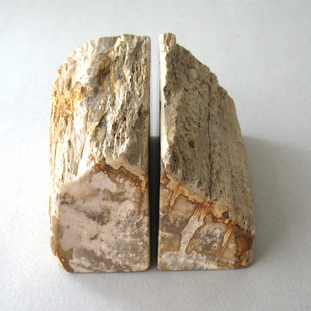 Petrified Wood Bookends - A Pair - Image 2 of 9