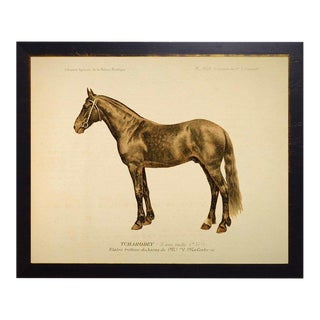 Country Print of Wally the Horse Bookplate - 26x20 For Sale