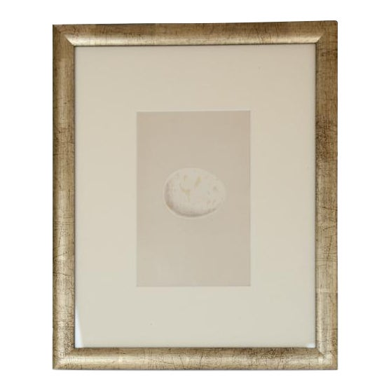 Late 19th C. Antique English egg lithograph by Morris For Sale