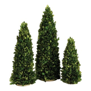 Kenneth Ludwig Chicago Mini Boxwood Trees - Set of 3 For Sale