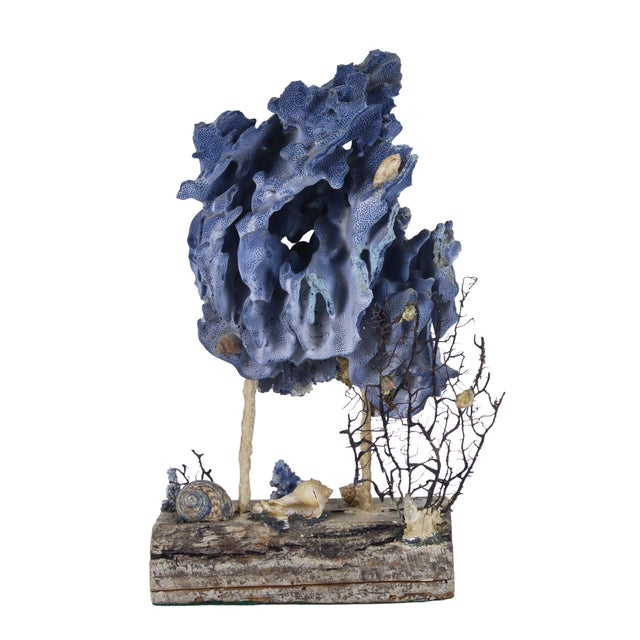 Oceanic Blue Coral on Wood Base - Image 1 of 3