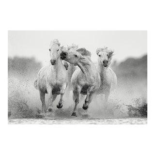 """""""Integrity"""" Horse Print by Ejaz Khan"""