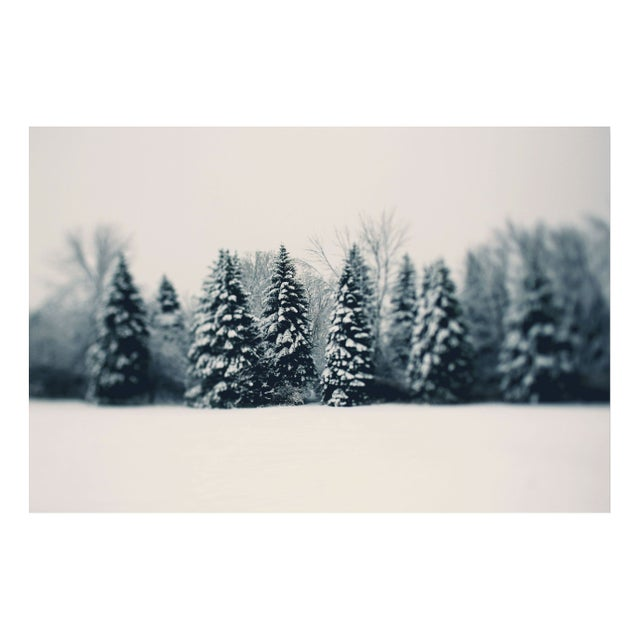 "Alicia Bock ""Winter and Woods"" Floating Print - Image 1 of 2"
