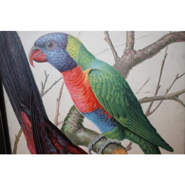 Framed Bird Wall Art Prints Pictures - Set of 4 For Sale In Cincinnati - Image 6 of 9