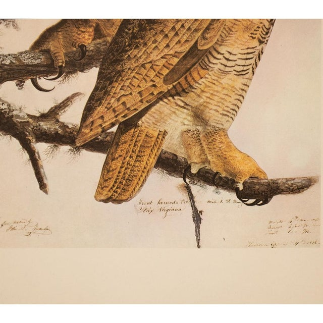 1960s 1960s Cottage Lithograph of Great Horned Owl by Audubon For Sale - Image 5 of 9