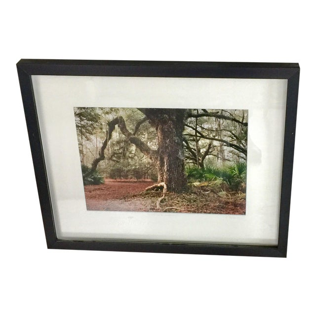 Cumberland Island Photograph by Laurie Coppedge For Sale