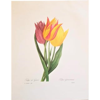 Pierre-Joseph Redouté Reproduction Yellow Tulip Bunch Botanical Print For Sale