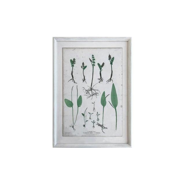 Glass 19th Century Bradbury & Evans Nature Printed Fern Print For Sale - Image 7 of 7